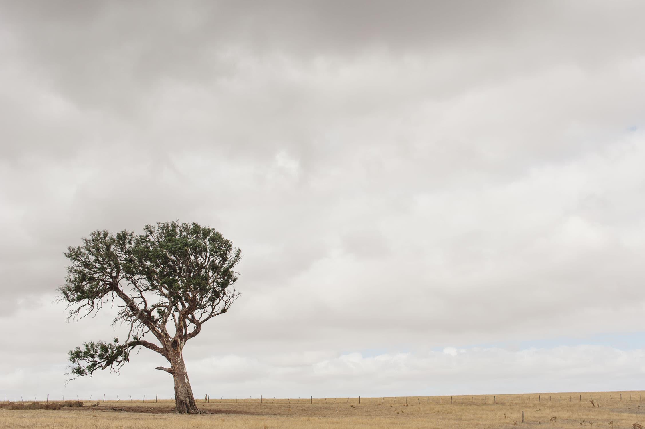 Lone tree on the horizon near Dunkeld