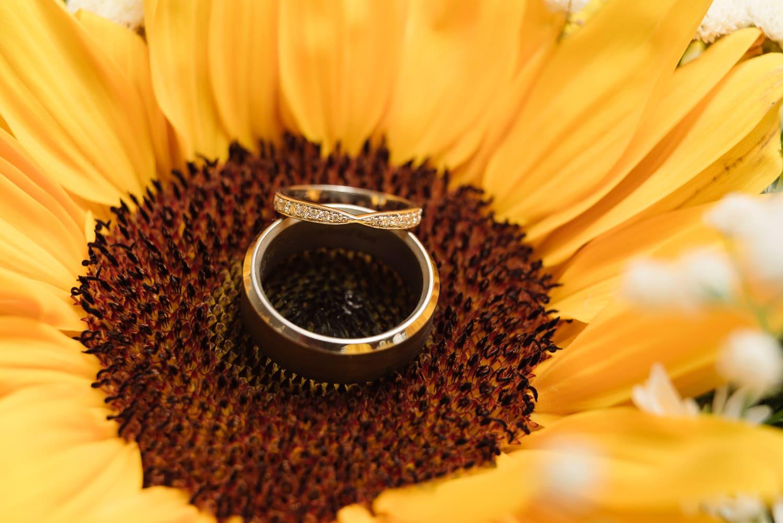 Rings in Sunflower